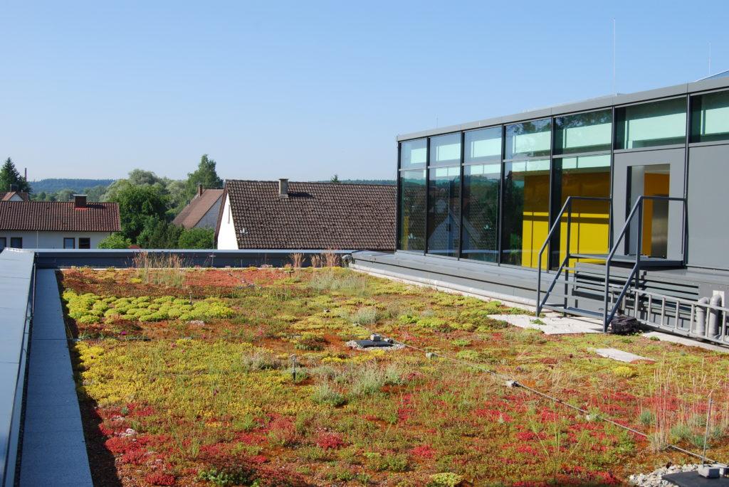 dach zielony retencyjny