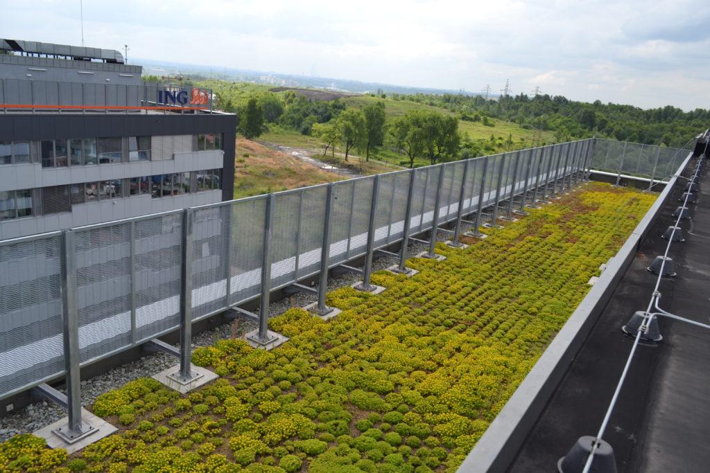 Zielony dach z sadzonkami rozchodników w Katowicach