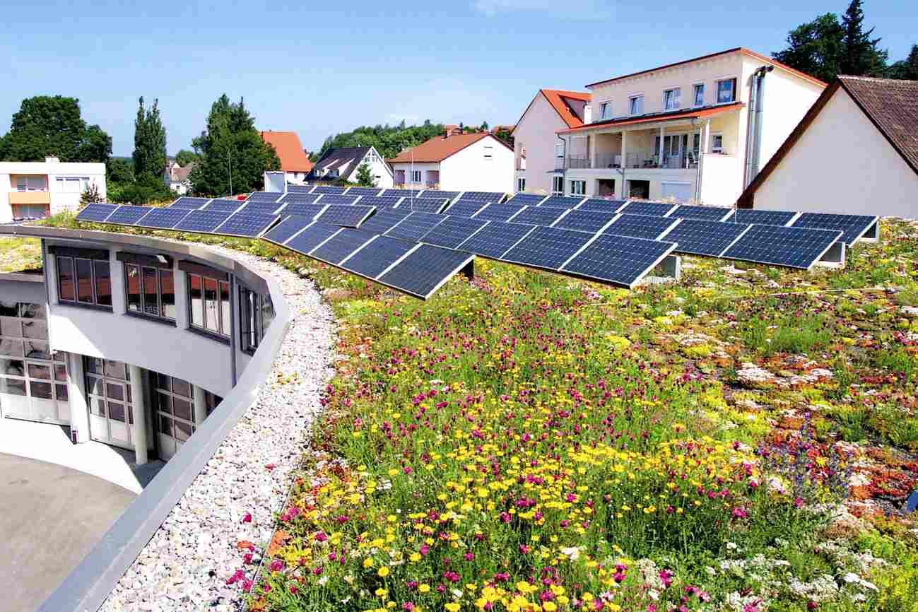 Zielony dach solarny
